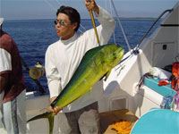 Mexican fishing and boating licence for Mexico fishing license